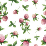 Hand drawn watercolor seamless pattern of Red clover. Stock Image