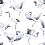 Hand-drawn watercolor seamless pattern with white Japanese dancing cranes. Repeated background with delicate birds Stock Photography