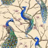 Hand drawn watercolor seamless pattern with wild peacocks and magnolia floral branches stock photo