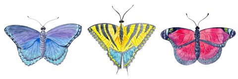 Hand drawn watercolor set of einsect beautiful exotic butterfly