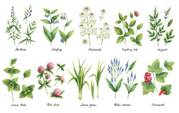 Hand drawn watercolor set of herbs and spices. Royalty Free Stock Photo