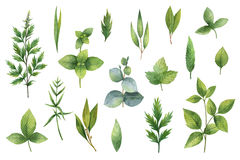 Hand drawn watercolor set of herbs and spices. Royalty Free Stock Images