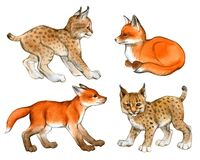 Hand drawn watercolor set of lynx and fox cubs isolated on a white background
