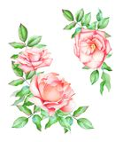 Set of orange roses with leaves royalty free illustration