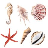 Hand drawn watercolor set with shells, starfish and sea horse isolated stock illustration