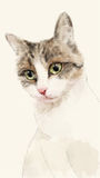 Hand drawn watercolor sketch of the cat. Hand drawn watercolor portrait of the cat Stock Photos