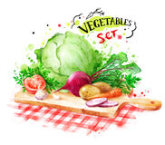 Hand drawn watercolor still life with vegetables Royalty Free Stock Photo