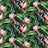 Hand drawn watercolor tropical bird flamingo seamless pattern . Exotic rose bird illustrations, jungle tree, brazil stock illustration