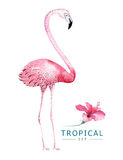 Hand drawn watercolor tropical birds set of flamingo. Exotic bird illustrations, jungle tree, brazil trendy art. Perfect Stock Image