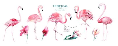 Hand drawn watercolor tropical birds set of flamingo. Exotic rose bird illustrations, jungle tree, brazil trendy art. Hand drawn watercolor tropical birds set of royalty free illustration