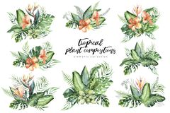 Hand drawn watercolor tropical flower bouquet composition. Exotic palm leaves, jungle tree, brazil tropic botany. Hand drawn watercolor tropical flower bouquets stock illustration
