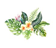 Free Hand Drawn Watercolor Tropical Flower Bouquets. Exotic Palm Leaves, Jungle Tree, Brazil Tropic Botany Elements And Royalty Free Stock Photo - 186875285