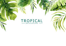 Hand drawn watercolor tropical plants background. Exotic palm leaves, jungle tree, brazil tropic borany elements. Perfect for fabric design. Aloha collection vector illustration