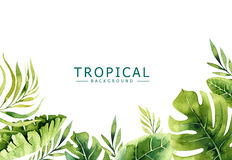 Hand drawn watercolor tropical plants background. Exotic palm leaves, jungle tree, brazil tropic borany elements. Perfect for fabric design. Aloha collection Royalty Free Stock Images