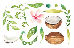 Hand drawn watercolor tropical plants set . Exotic palm leaves, jungle tree, brazil tropic botany elements and flowers Stock Images