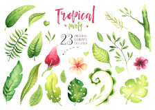 Hand drawn watercolor tropical plants set . Exotic palm leaves, jungle tree, brazil tropic botany elements and flowers Royalty Free Stock Photo