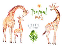 Hand drawn watercolor tropical plants set and giraffe. Exotic palm leaves, jungle tree, brazil tropic botany elements. And monkeys. Perfect for fabric design Stock Photos
