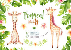 Hand drawn watercolor tropical plants set and giraffe. Exotic palm leaves, jungle tree, brazil tropic botany elements Royalty Free Stock Photo