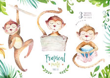 Hand drawn watercolor tropical plants set and monkey. Exotic palm leaves, jungle tree, brazil tropic botany elements and. Monkeys. Perfect for fabric design vector illustration