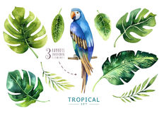 Hand drawn watercolor tropical plants set and parrot. Exotic pa. Lm leaves, jungle tree, brazil tropic borany elements and parrots. Perfect for fabric design vector illustration