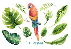 Hand drawn watercolor tropical plants set and parrot. Exotic pa. Lm leaves, jungle tree, brazil tropic borany elements and parrots. Perfect for fabric design Royalty Free Stock Photography