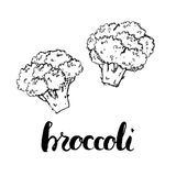 Hand drawn watercolor vegetables broccoli with handwritten words royalty free illustration