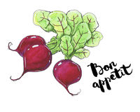 Hand drawn watercolor vegetables radish with handwritten words o Stock Images