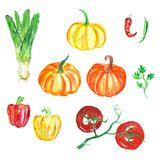 Hand drawn watercolor vegetables set. Fresh food illustration, harvest season. stock illustration