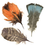 Hand drawn watercolor vibrant feather set. Boho feather style. illustration feather. isolated on white. Bird feather fly design fo Royalty Free Stock Photo