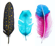 Hand drawn watercolor vibrant feather set. Stock Image