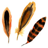 Hand drawn watercolor vibrant feather set. illustration red feather. Boho style feather isolated on white. Bird feather fly design stock illustration
