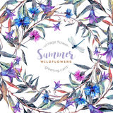 Hand drawn watercolor wildflower wreath Stock Image