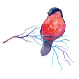 Hand drawn watercolor winter branch with a bird. Hand drawn winter branch with a bird. Watercolor illustration of bullfinch sitting on the twig for card, poster royalty free illustration