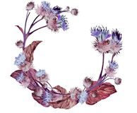 Hand drawn watercolor wreath of a colorful neon red and gray meadow thistle. Botanical vintage watercolor illustration Royalty Free Stock Image