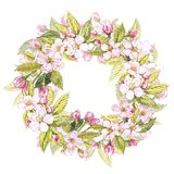 Hand-drawn watercolor wreath of flowers of apples and leaves illustration. Watercolor botanical illustration isolated on. White background Stock Images