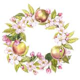 Hand-drawn watercolor wreath of flowers of apples and leaves illustration. Watercolor botanical illustration isolated on. White background Royalty Free Stock Image