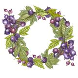 Hand-drawn watercolor wreath of flowers of Black currant and leaves illustration. Watercolor botanical illustration stock illustration