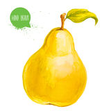 Hand drawn watercolor yellow pear with leaf. Isolated on white background fruit illustration. Royalty Free Stock Photography