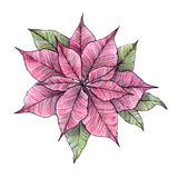 Hand drawn watercolour illustration - Merry Christmas poinsettia Stock Image
