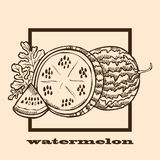 Hand drawn watermelon Stock Images