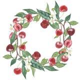 Hand-drawn waterverfkroon van bloemen van kers en bladerenillustratie geïsoleerde waterverf botanische illustratie stock illustratie