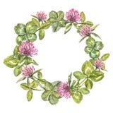 Hand-drawn waterverfkroon van bloemen van rode klaver en bladerenillustratie Geschilderde botanische three-leaved weide Royalty-vrije Stock Afbeelding
