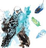 Hand-drawn waterverfpapegaai en veren Stock Afbeeldingen