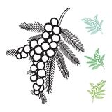 Wattle Flower Vectors Elements Royalty Free Stock Images