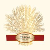 Hand drawn wheat sheaf on beige background with cereal banner. Cereal brand icon or logo template. Hand drawn wheat sheaf on beige background with banner Royalty Free Stock Photography