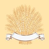 Hand drawn wheat sheaf on beige background with white elegant ba. Nner Vector decorative element, brand icon or logo template Royalty Free Stock Photography