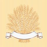 Hand drawn wheat sheaf on beige background with white elegant ba. Nner Vector decorative element, brand icon or logo template Royalty Free Stock Image