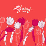 Hand drawn white outline tulip flowers on pink background.  Stock Image