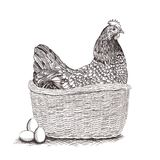 Wicker basket with Easter bunny, spring chickens, colorful flowers, painted eggs and willow twigs isolated on white. Hand drawn wicker basket with Chicken, eggs Stock Photo