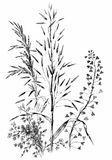 Hand drawn wild cereals. Royalty Free Stock Images